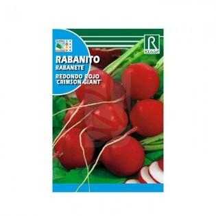 Semillas de Rabanito rojo