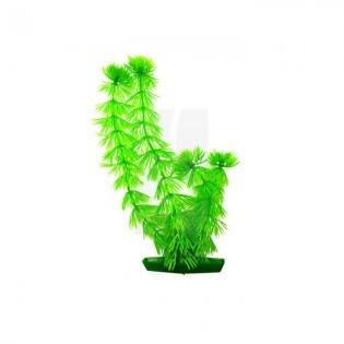 Planta Acuario Mediana 20 cm.
