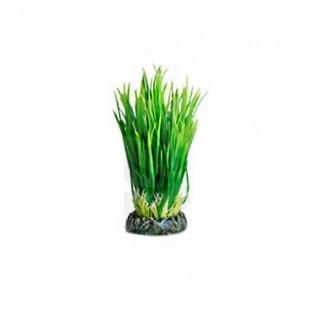 Planta Acuario Sri Lanka S